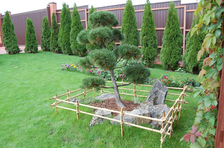 Деревья для ландшафтного дизайна названия фото